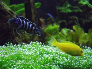 aquarium-fish-behavior-2