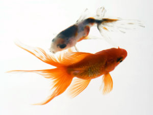 zhivotnie+morskie+zhiteli+akvariumnie+ribki+58032477860