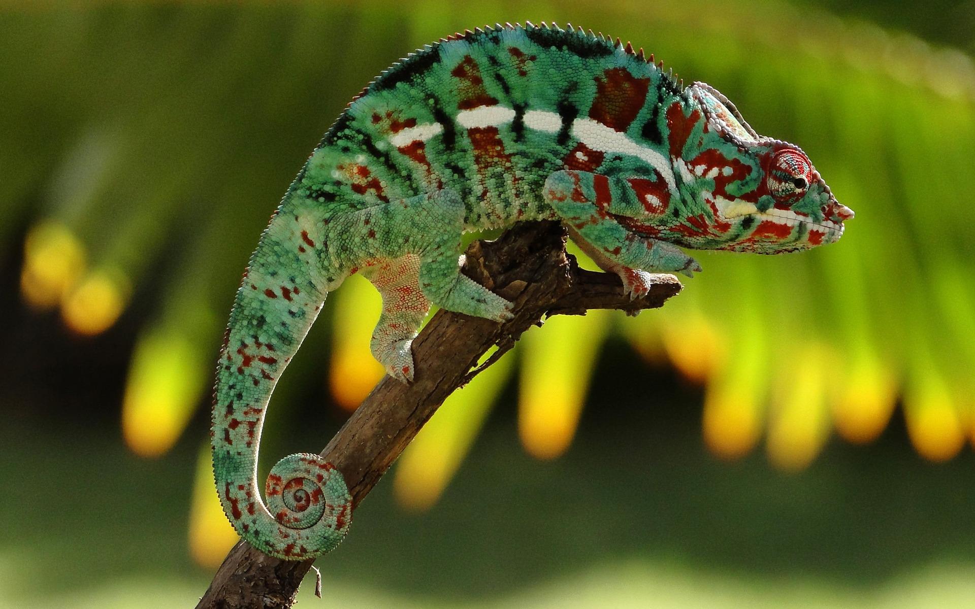 1380311816-hameleon----73