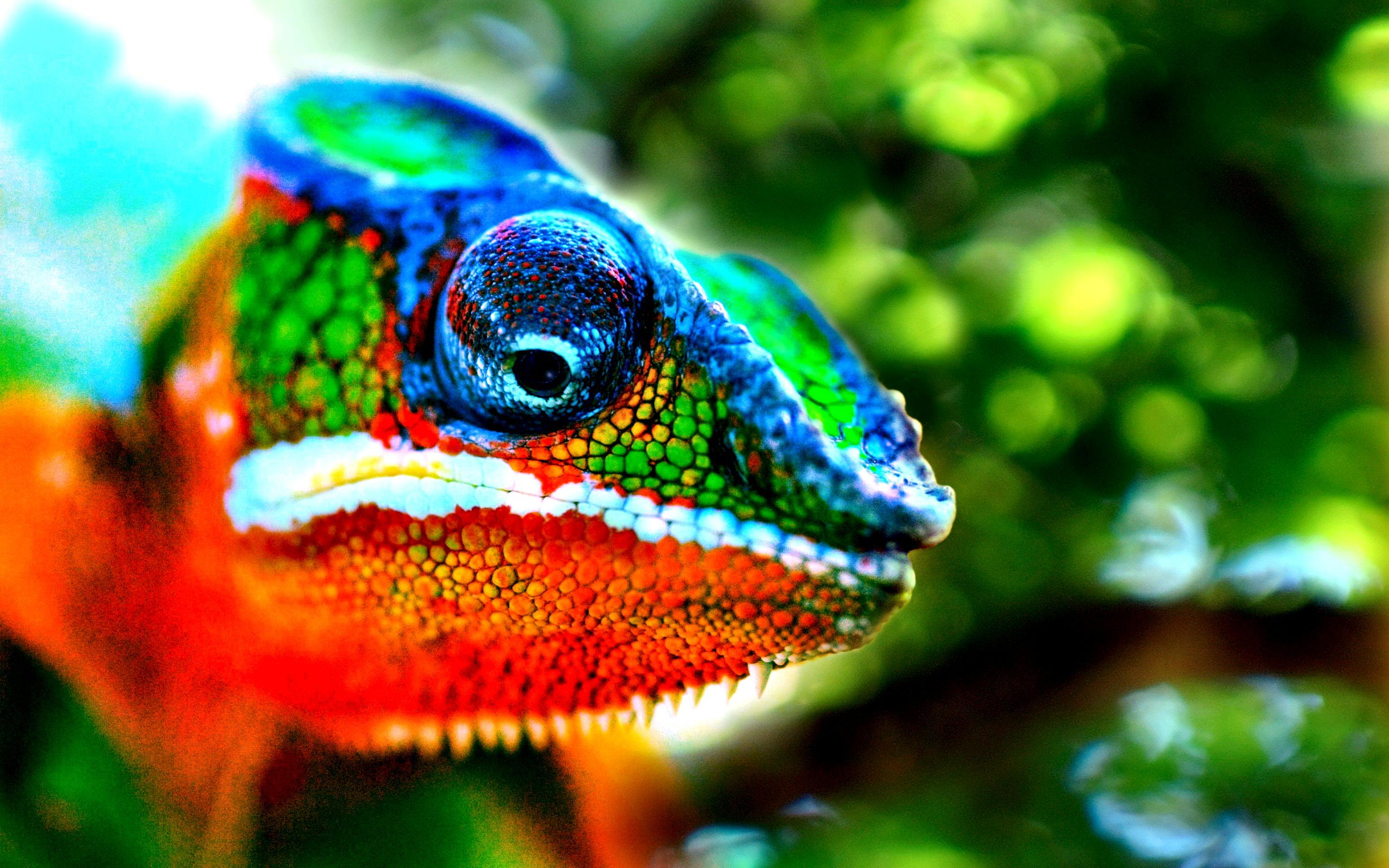 1380311824-hameleon----81