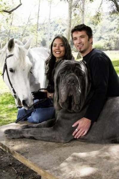 biggest-dog