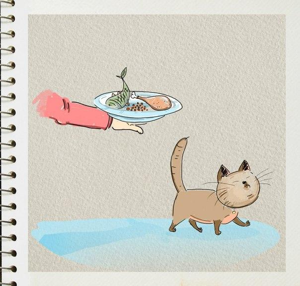 рисунок. кот отказывается от еды