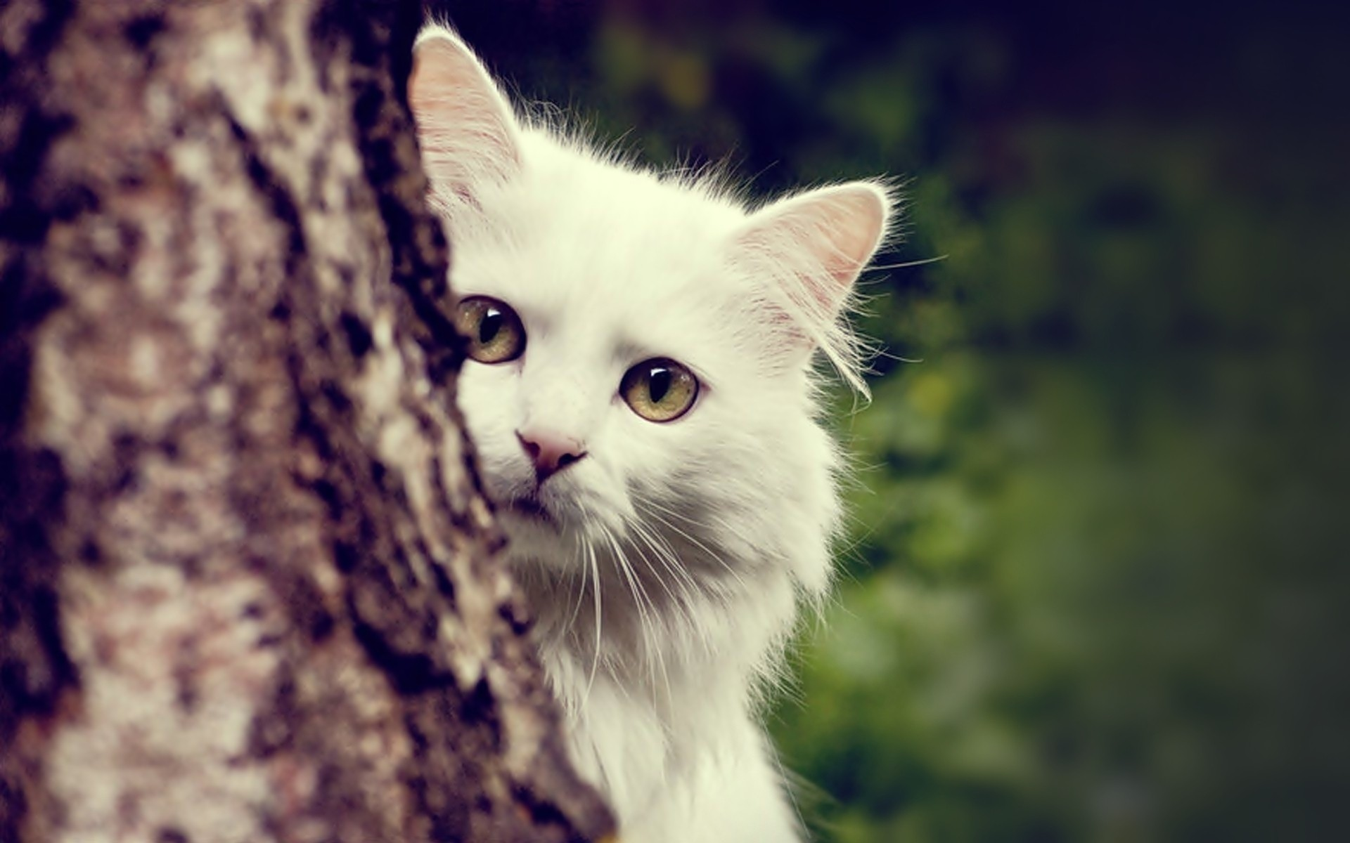 wallpapers-cat-22