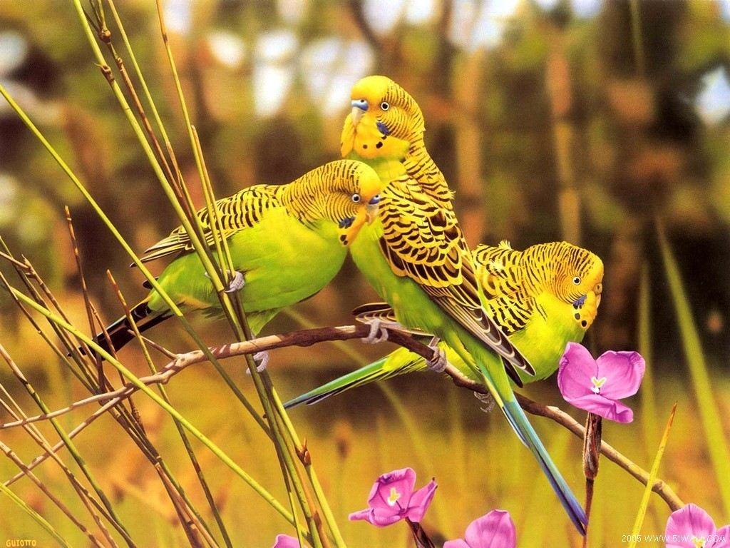 yellow_birds-1024
