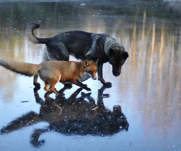 Друзья на замерзшем пруду