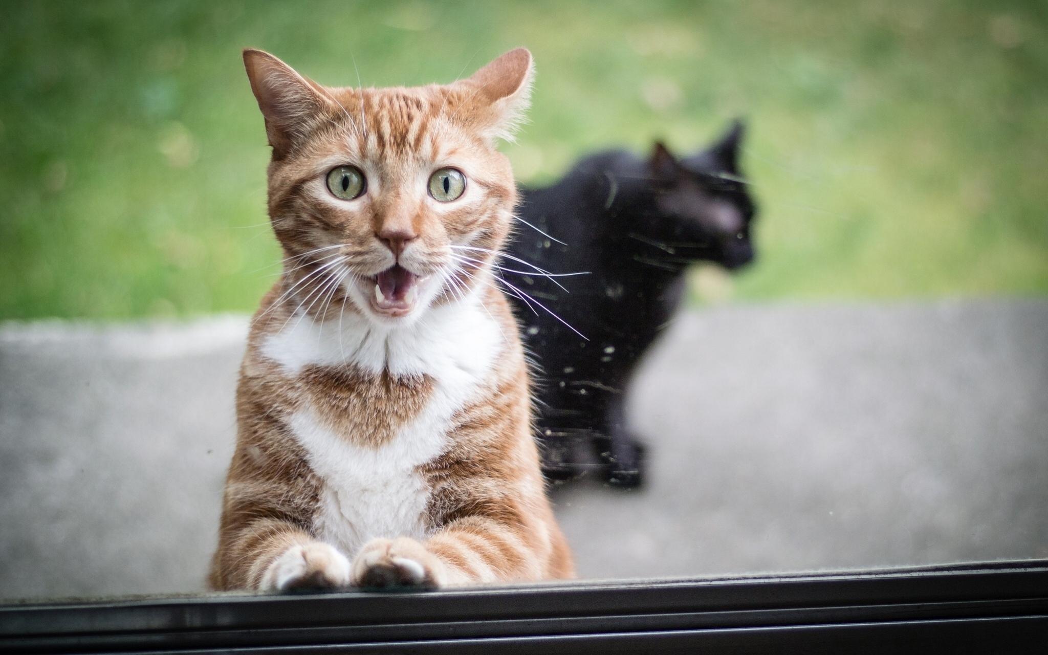 Animals___Cats__Surprised_red_cat_and_black_cat_044831_