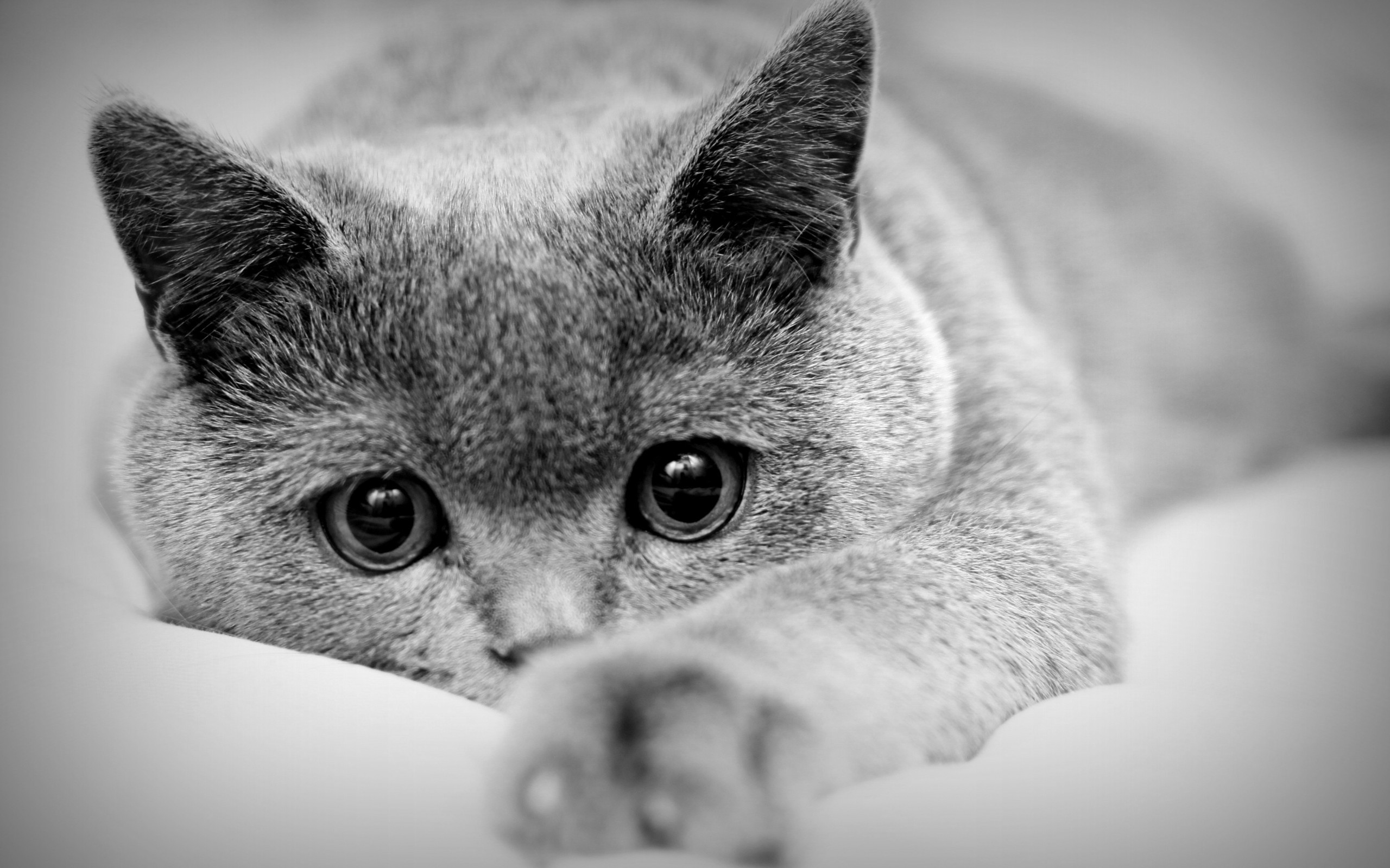 Animals___Cats_Cat_with_big_eyes_043843_