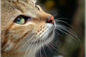 котик красивый