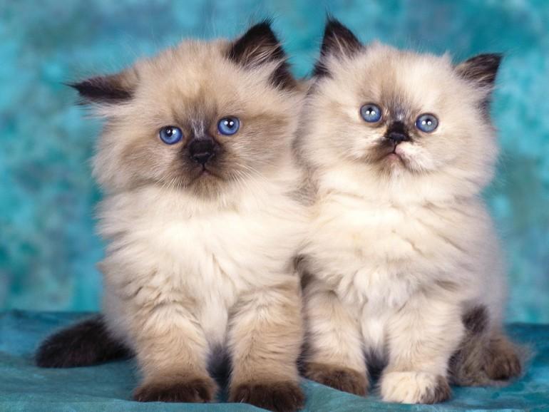 Cats083