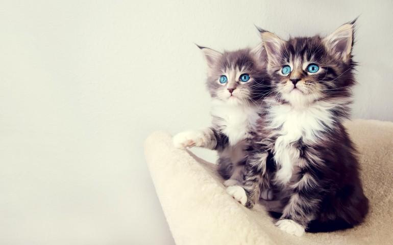 котята мими