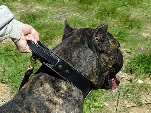 leather-dog-collar-cane-corso-pretty
